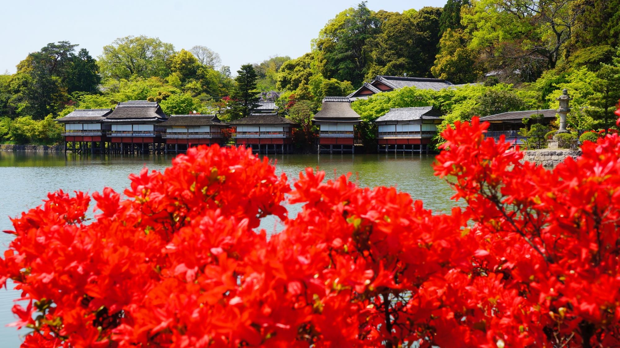 八条ヶ池の絵になる春の華やかな景色