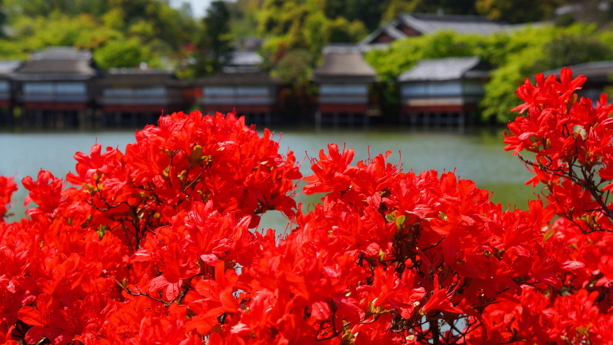 八条ヶ池の風情ある情景を彩る鮮やかな赤い花