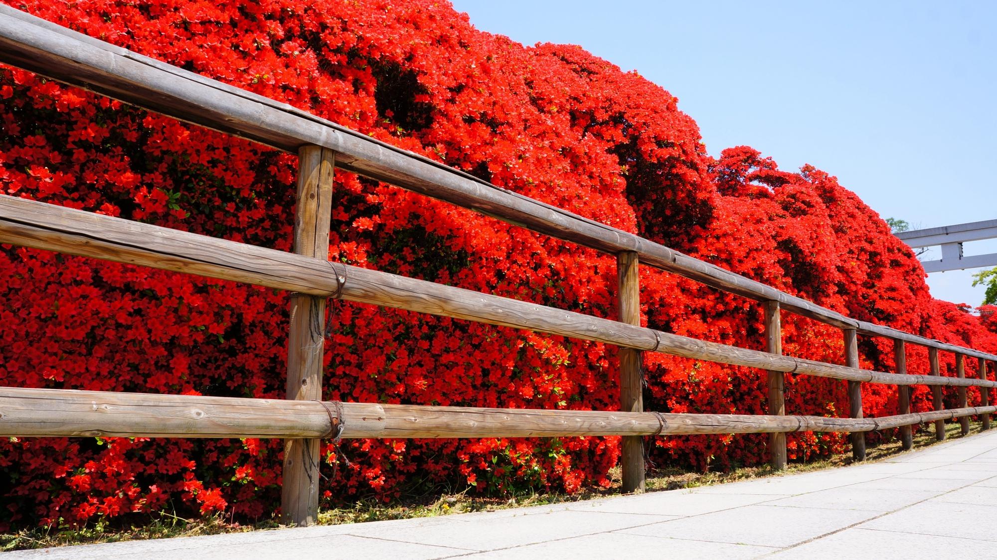 上から下まで真っ赤な壁になる天晴れな春の情景