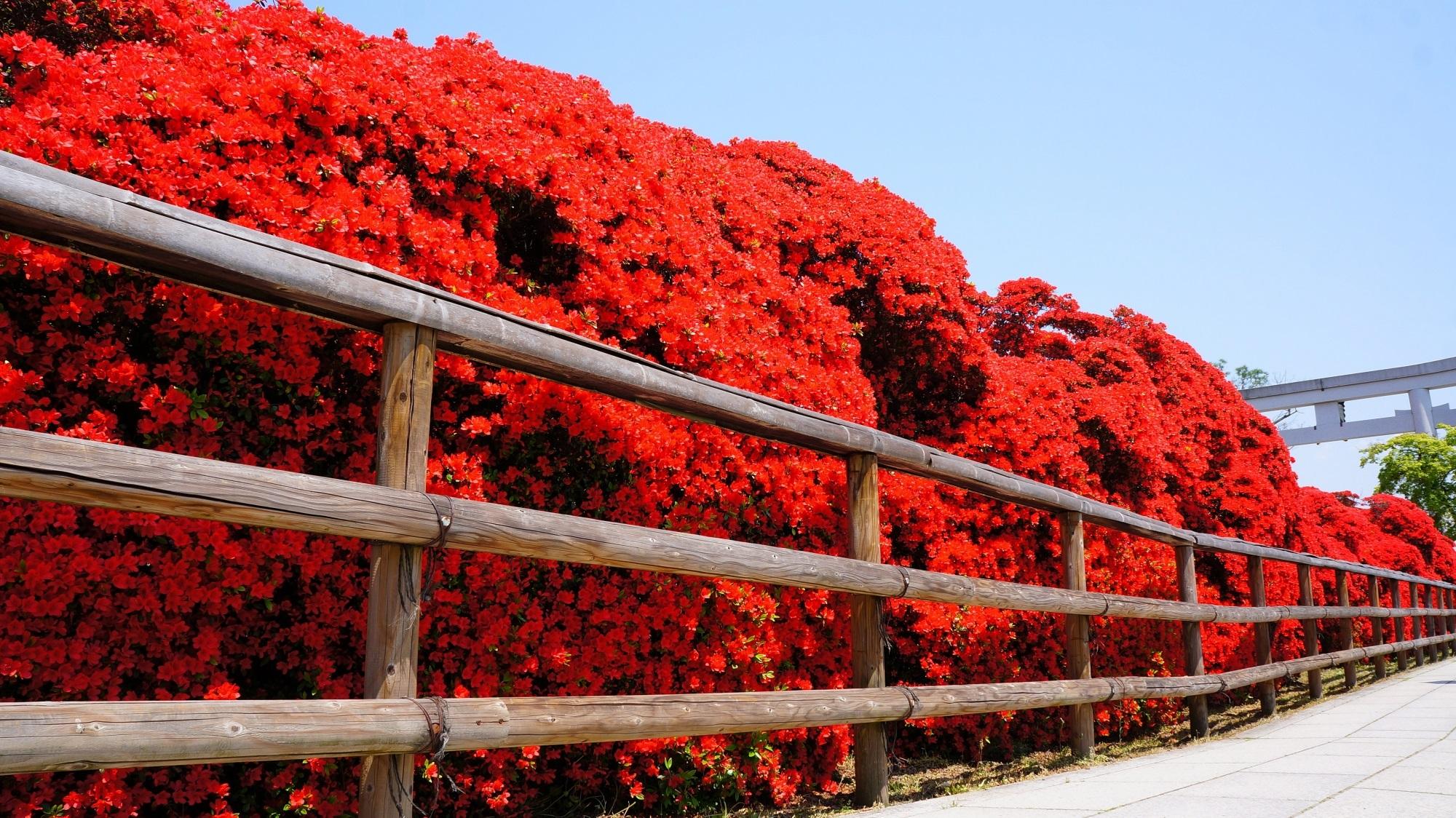 八条ヶ池 キリシマツツジ 凄すぎる真っ赤な水上橋