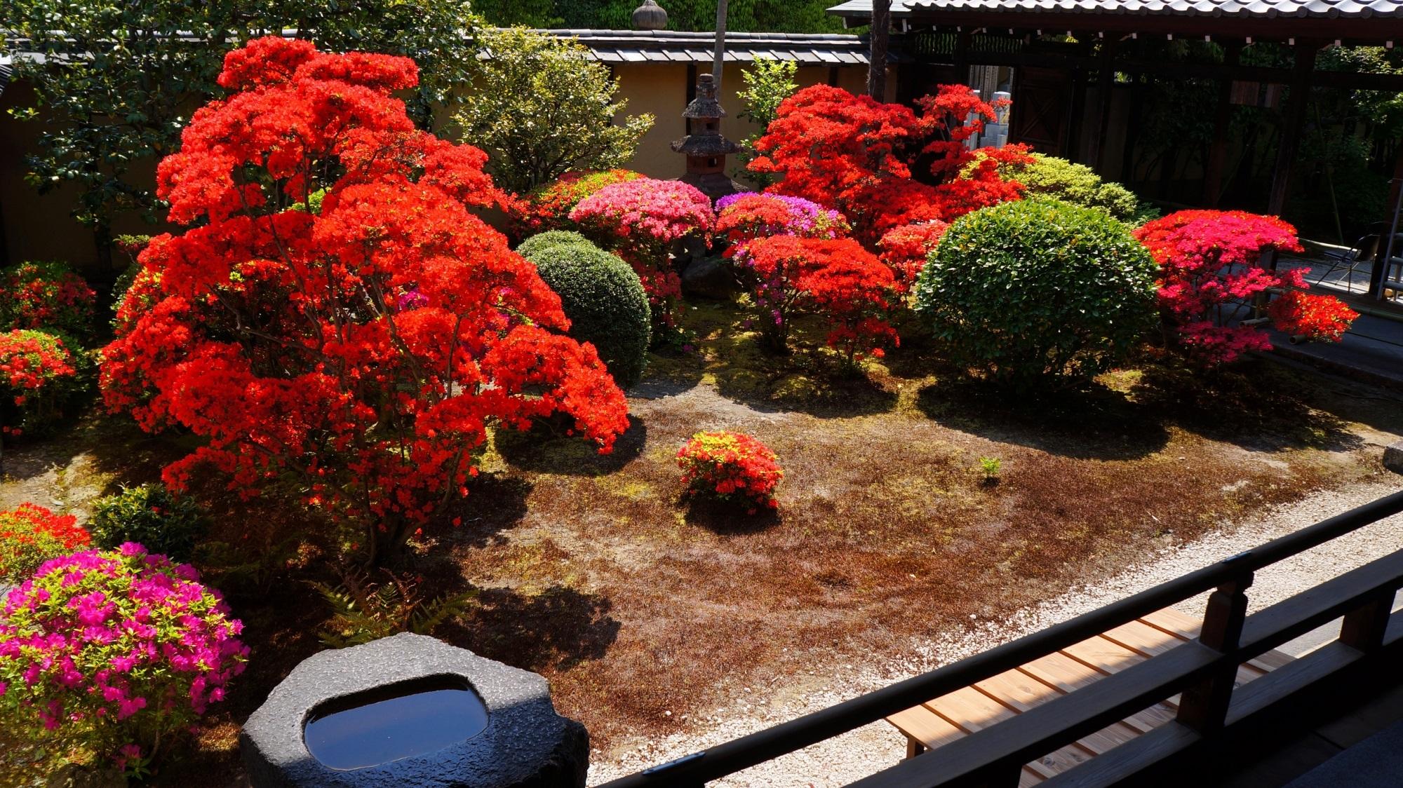 多彩な煌き ツツジの名所の建仁寺 正伝永源院