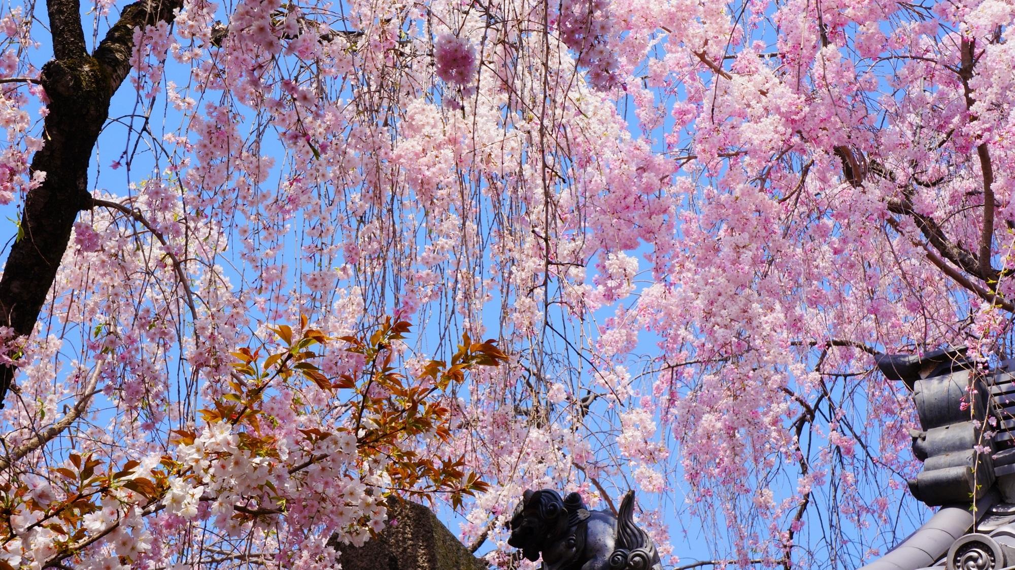 街中の穴場の桜の名所
