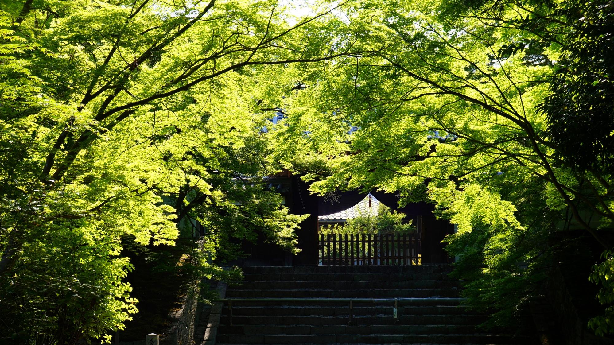 曼殊院の勅使門と眩しい新緑や青もみじ