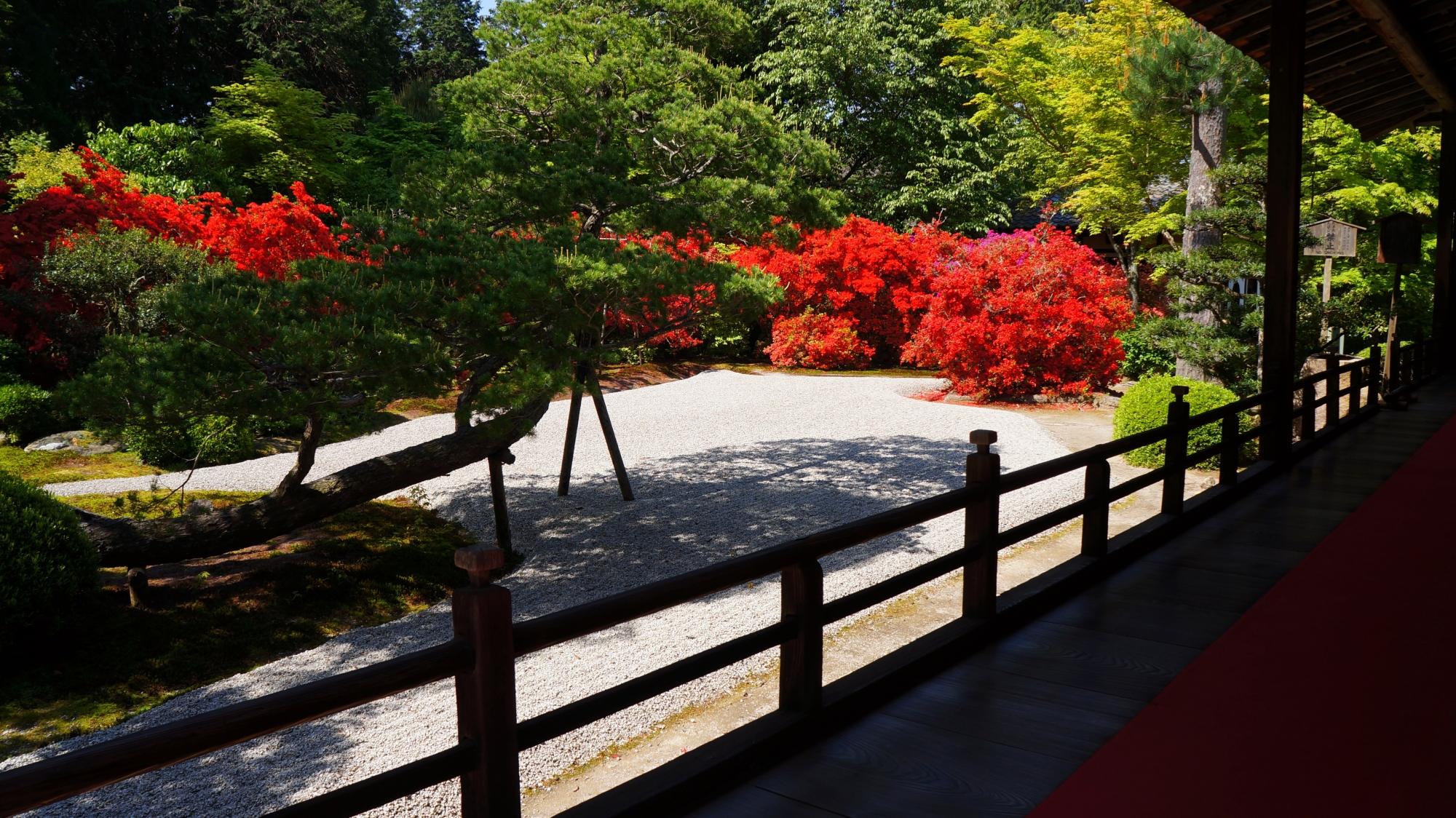 風情ある庭園を一気に彩る見事な赤さの霧島躑躅