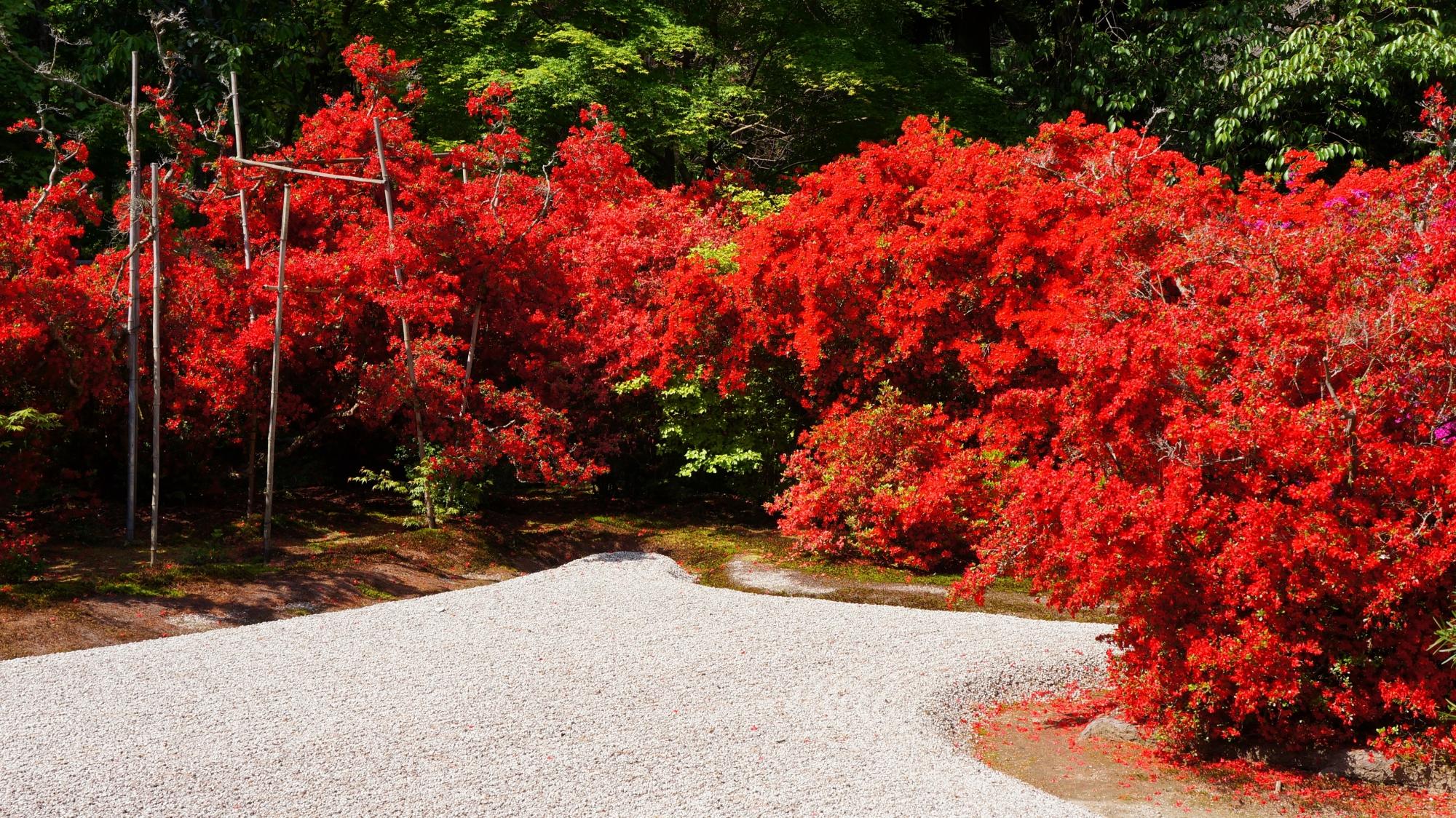 天晴れな赤さで上品な庭園を華やぐキリシマツツジ