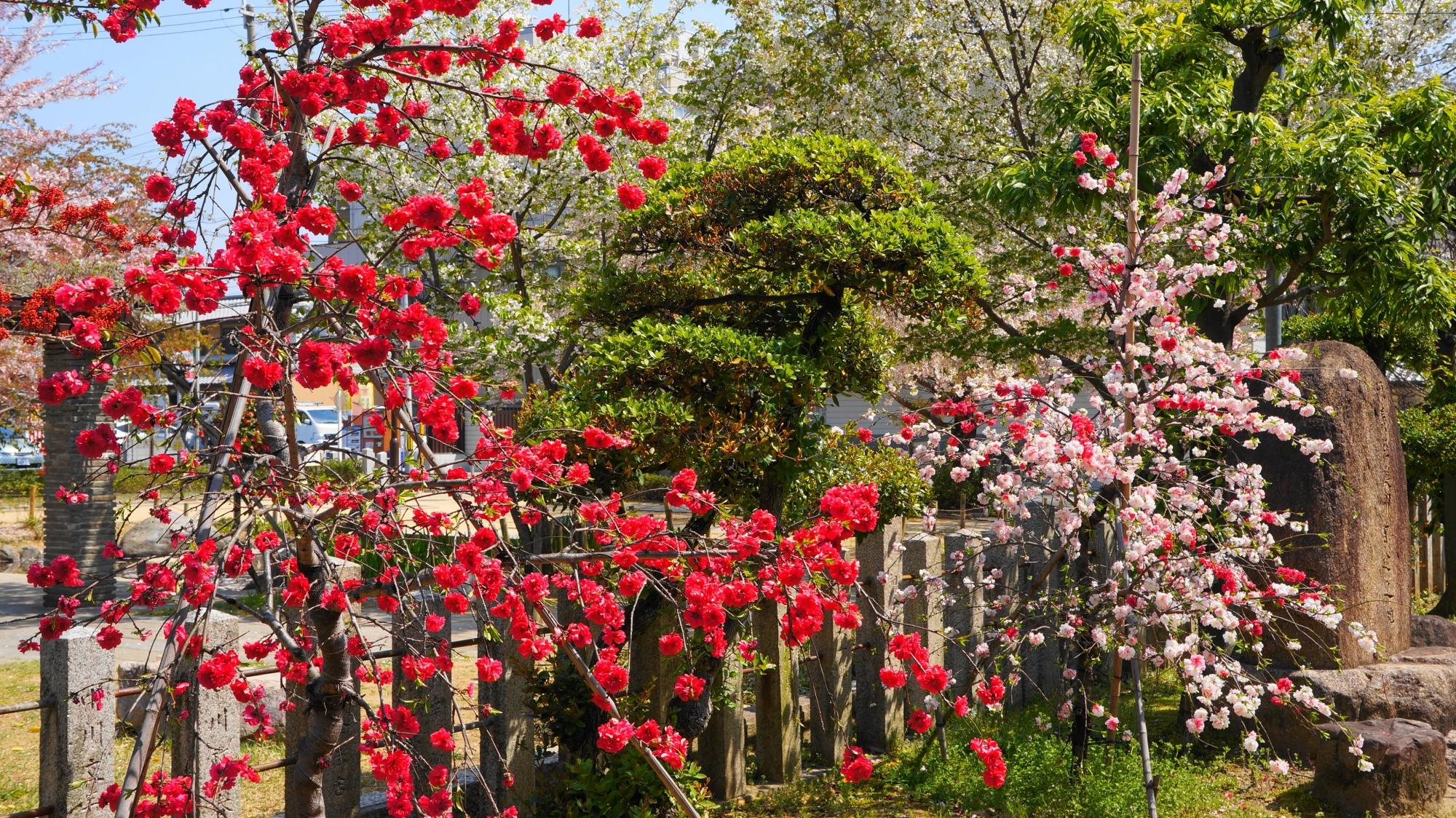 旅行の安全祈願の神社として知られる首途八幡宮