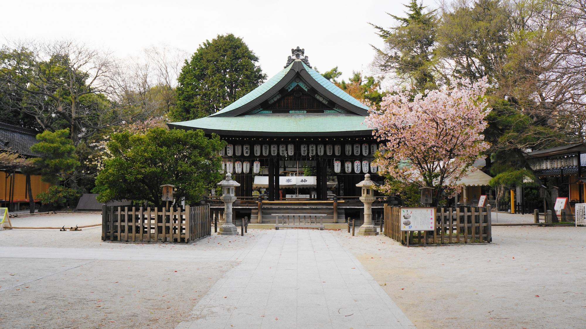 横に桜が咲く拝殿