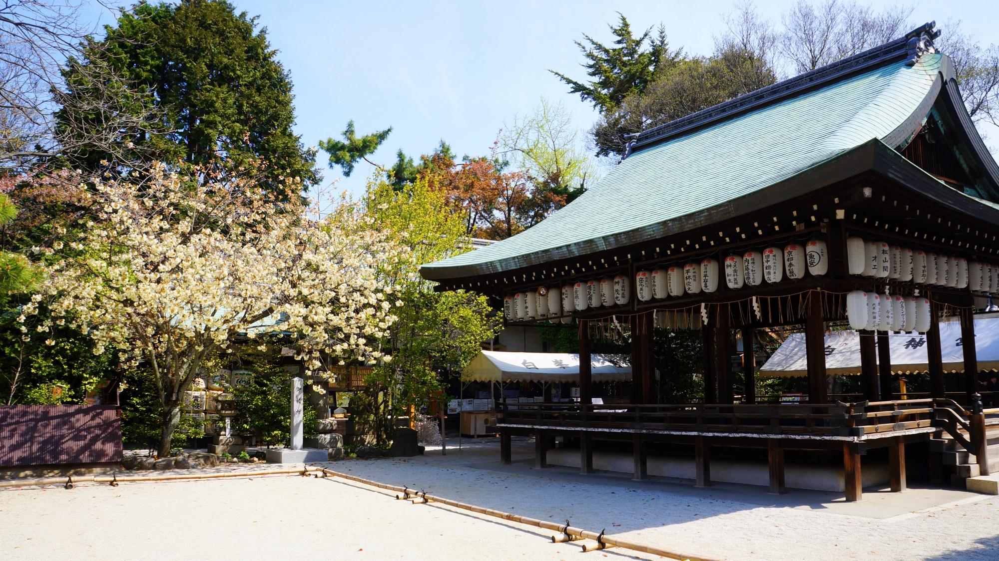 白峯神宮の拝殿と黄桜