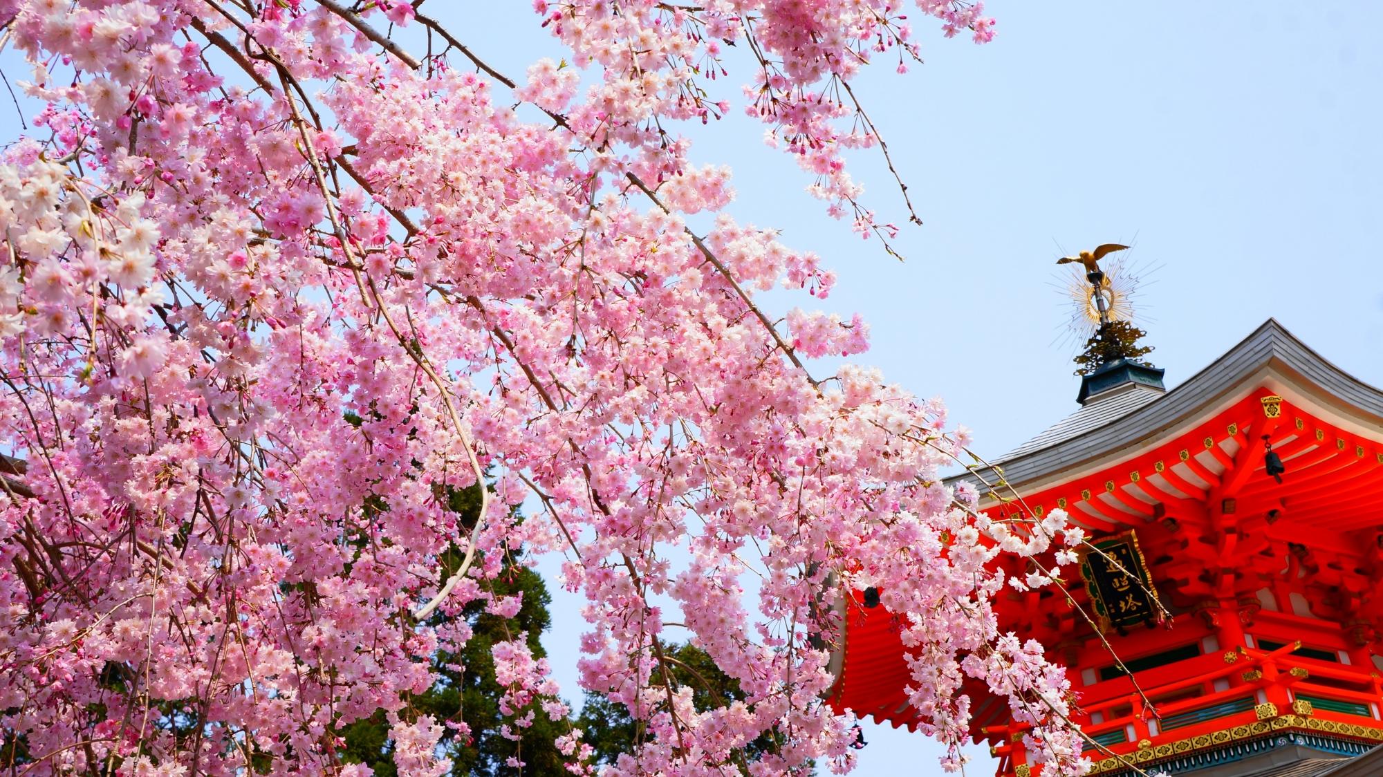明るい春色につつまれる遍照堂