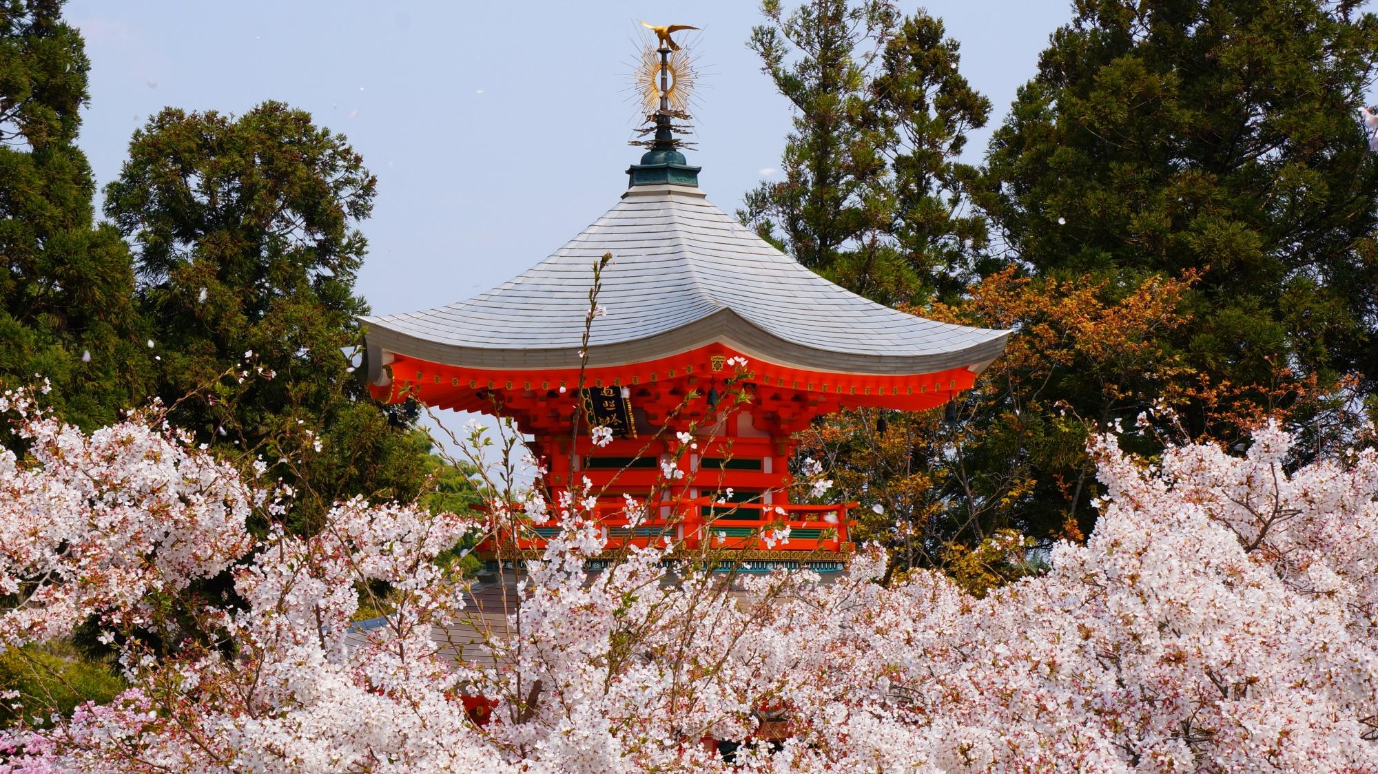 正法寺の遍照堂と溢れ出す華やかな桜
