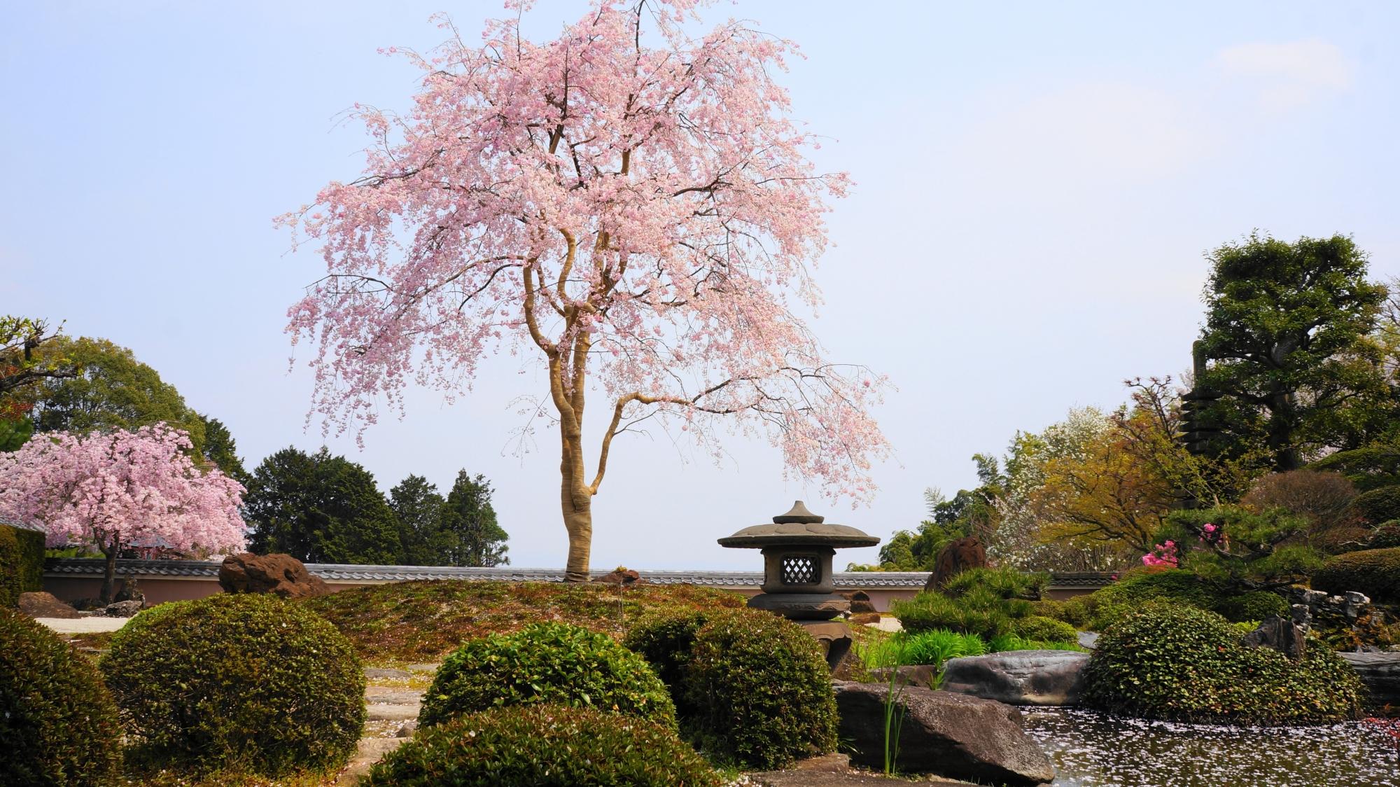高画質 写真 桜 正法寺