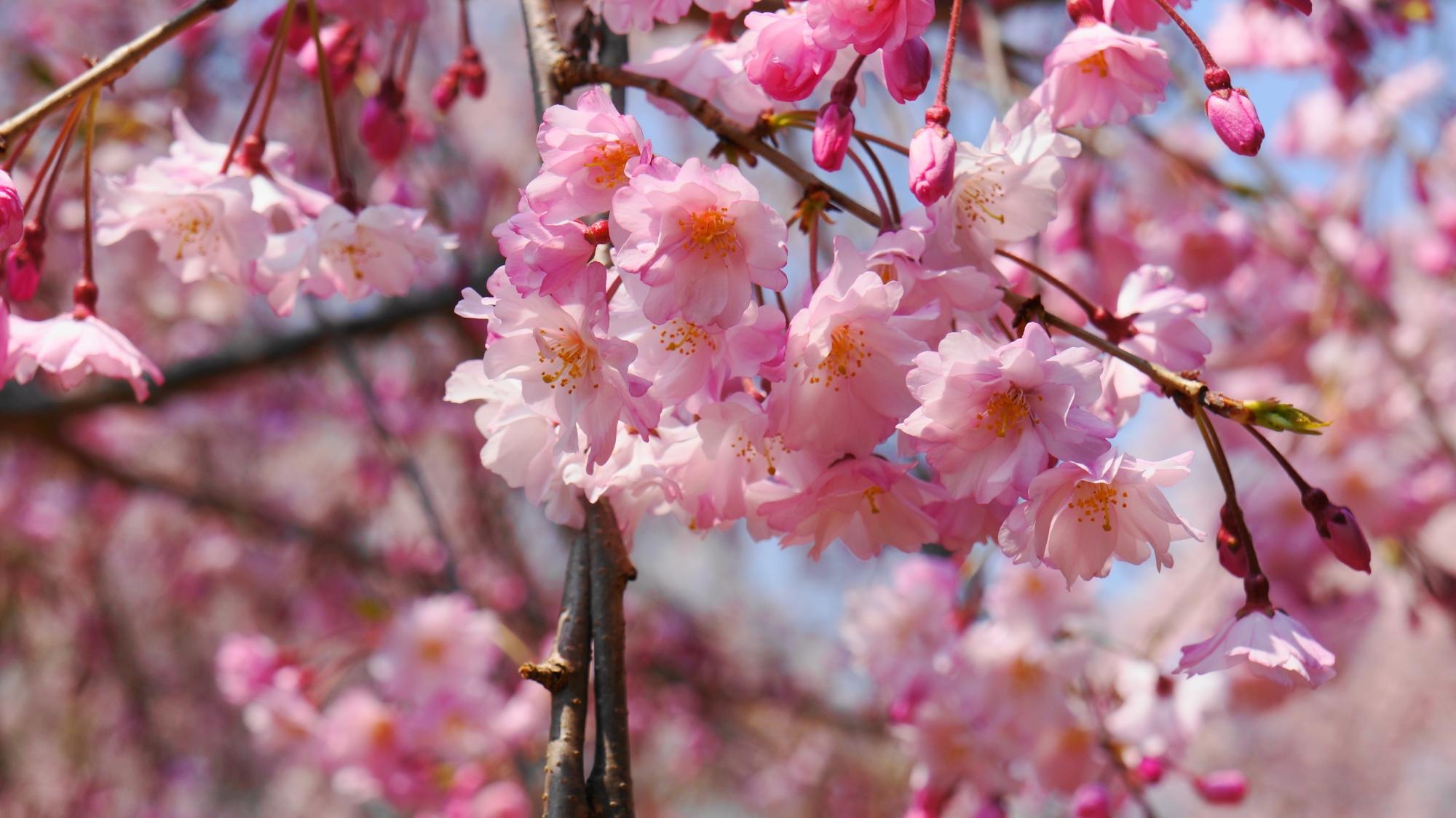 淡い色合いから濃い目の色合いまでの様々な花