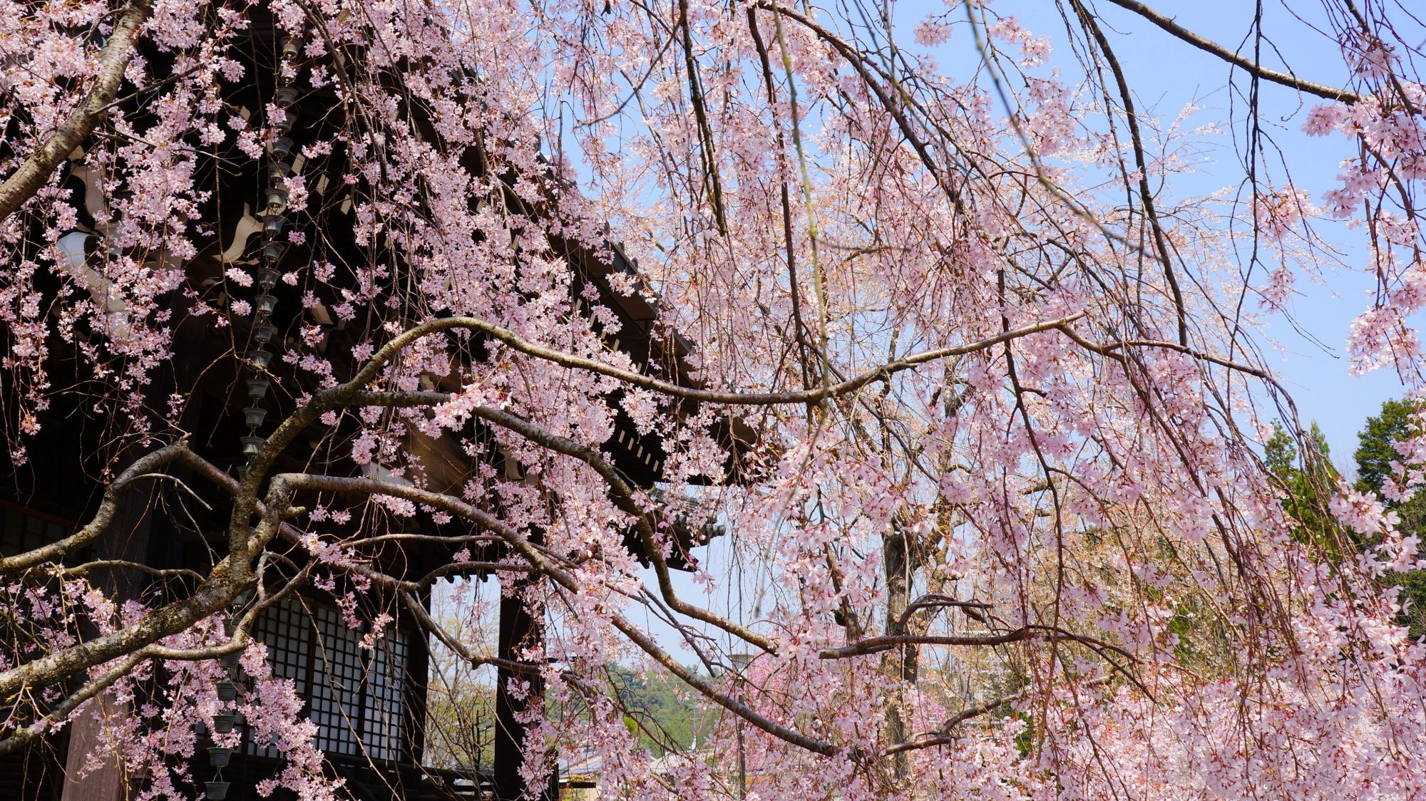青空から降り注ぐ華やかな花