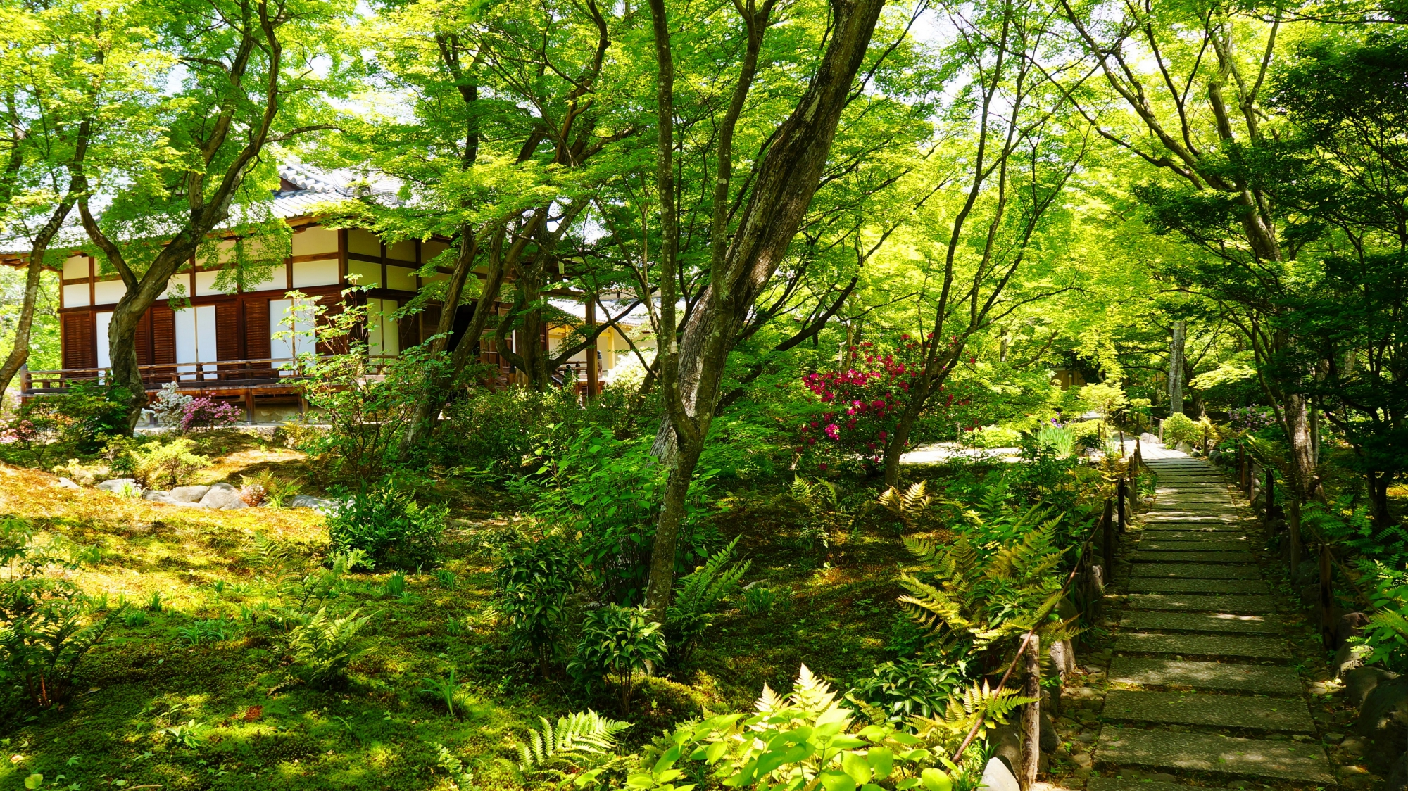 宝筐院(ほうきょういん) 新緑と青もみじ 鮮やかな緑の世界