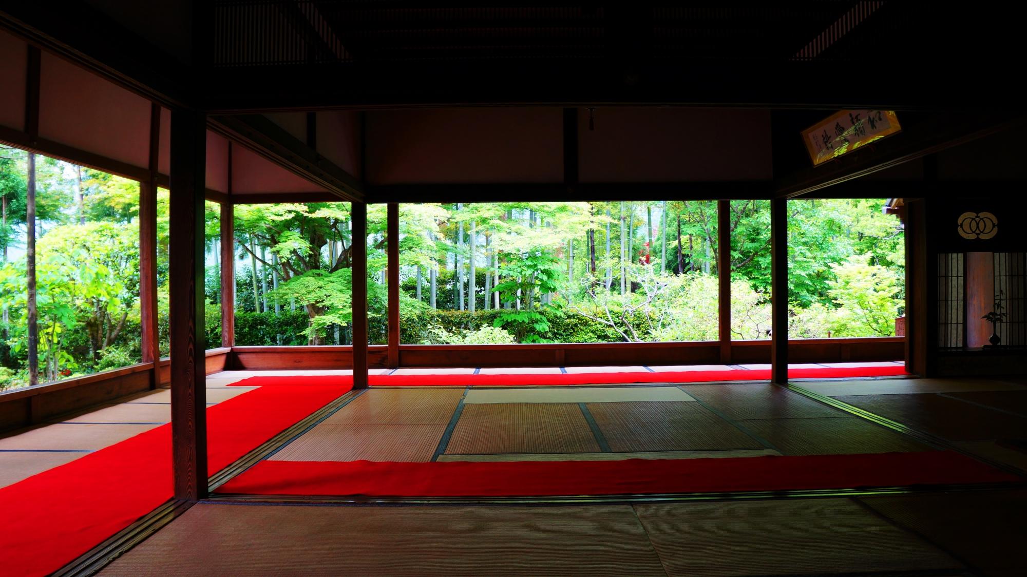 宝泉院 新緑と青もみじ 大原の額縁の庭園
