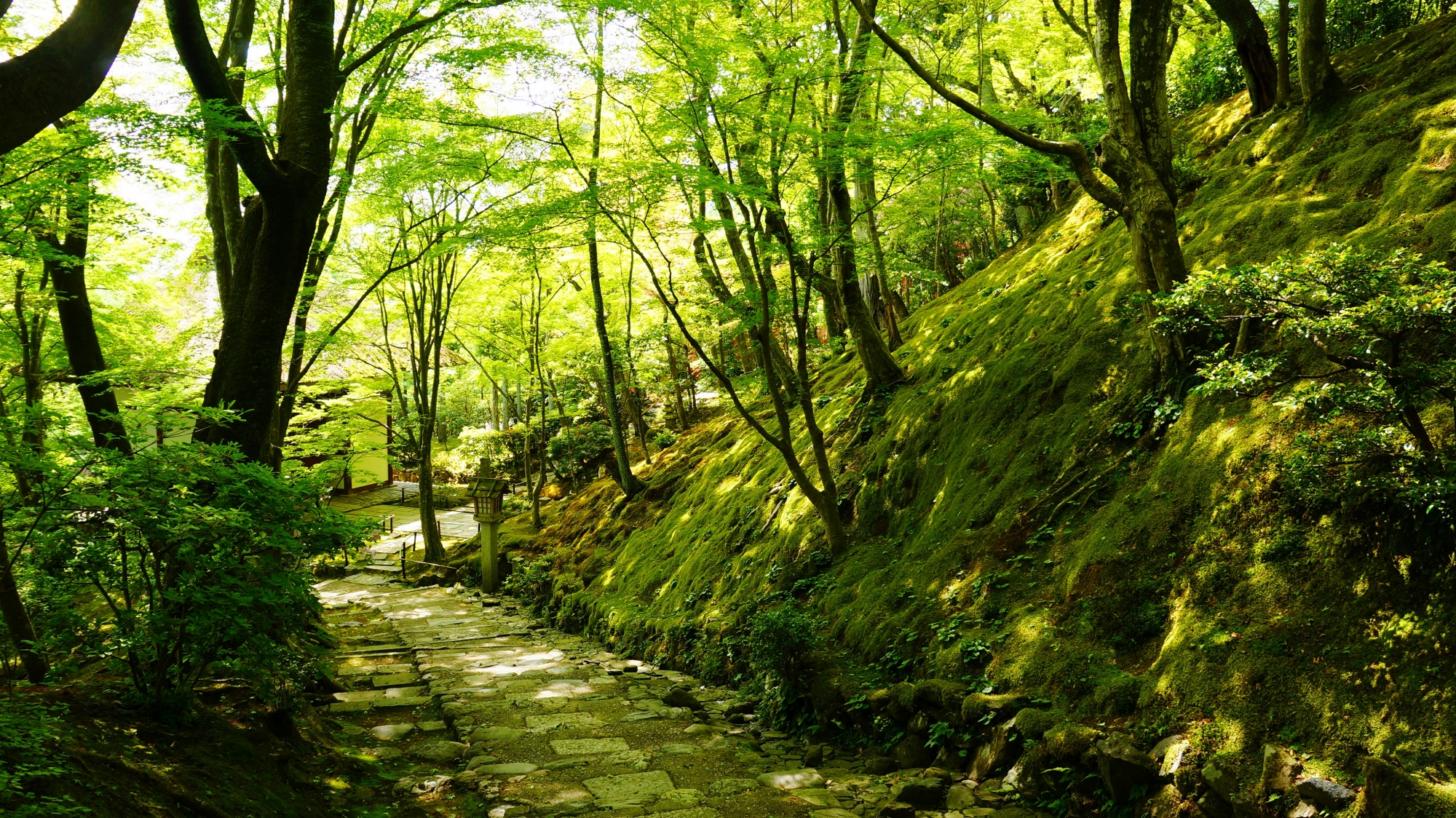 京都奥嵯峨のさわやかな緑