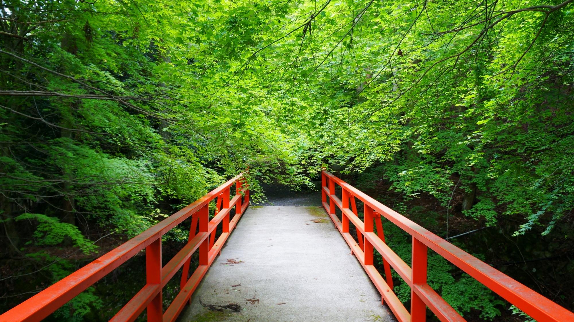 勝手神社 新緑と青もみじ 大原の緑と赤のコントラスト