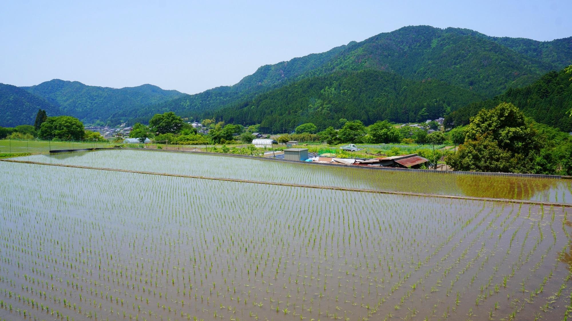 大原 新緑と田んぼと畑 京都の清々しい緑と大地