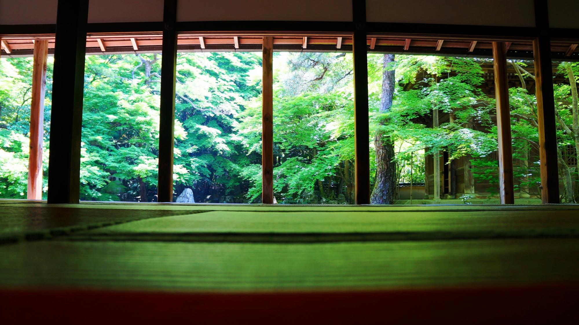 京都の静寂の緑の空間