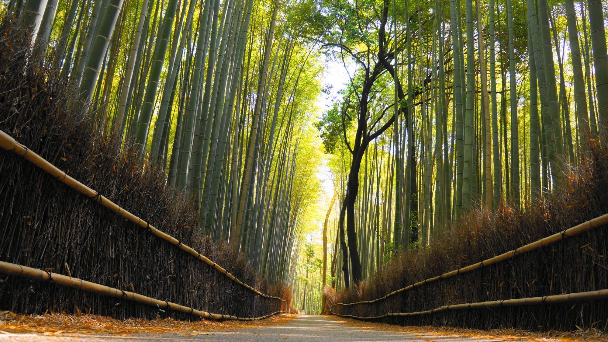京都嵐山の人気観光名所