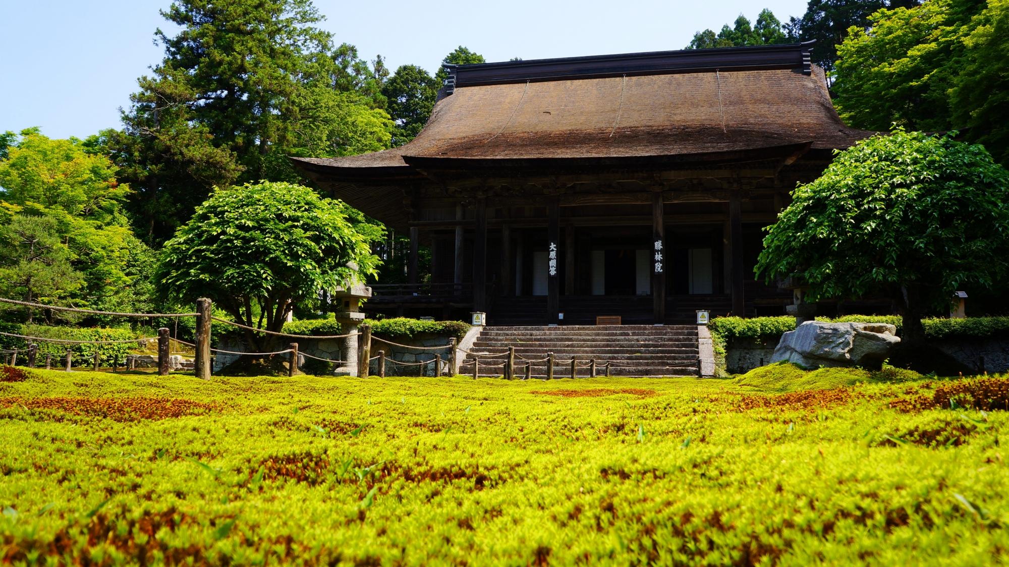 勝林院 苔と新緑 京都大原の美しい緑