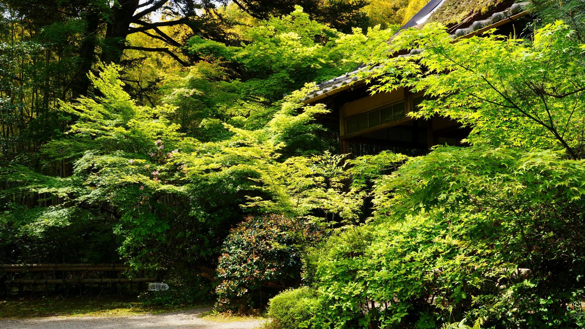 滝口寺 新緑と青もみじ 奥嵯峨の緑の隠れ家