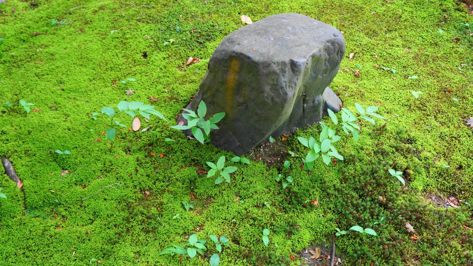 金福寺の静かな境内を彩る淡い緑の苔