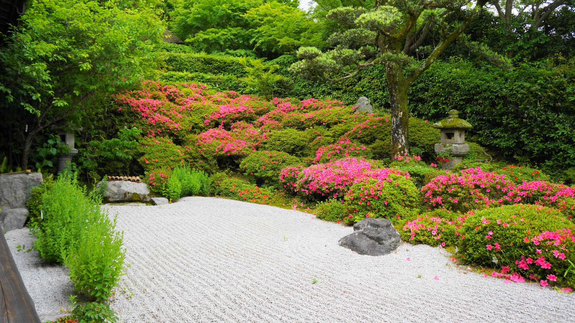 サツキが見ごろをむかえた金福寺の方丈前枯山水庭園