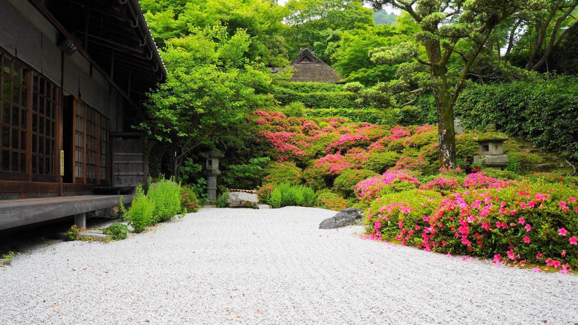 白砂や緑に映える華やかなピンク