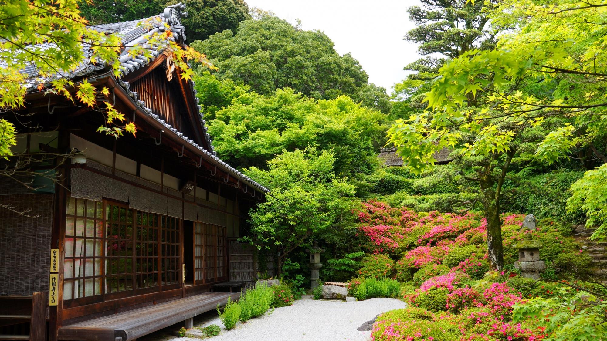 眩い新緑とサツキにつつまれる趣きある金福寺の方丈