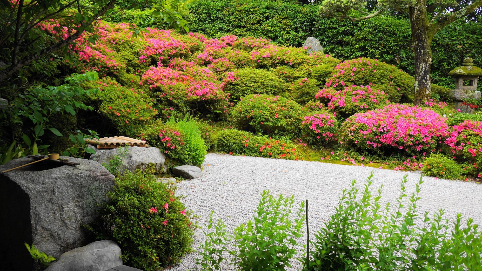 華やかさの中にも風情が感じられる手水鉢とサツキの情景