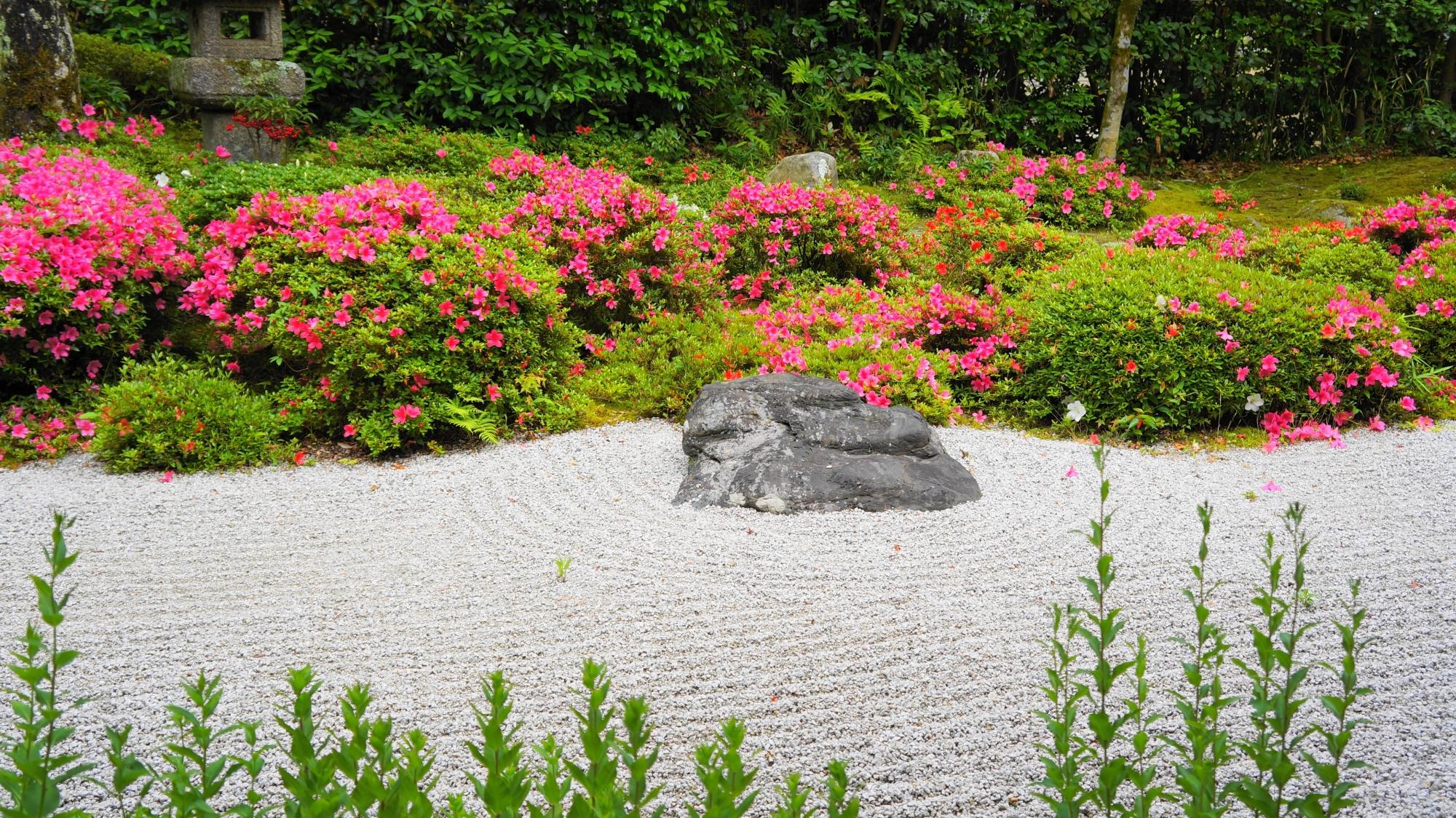 白砂と岩を華やぐ鮮やかなピンクのサツキの花