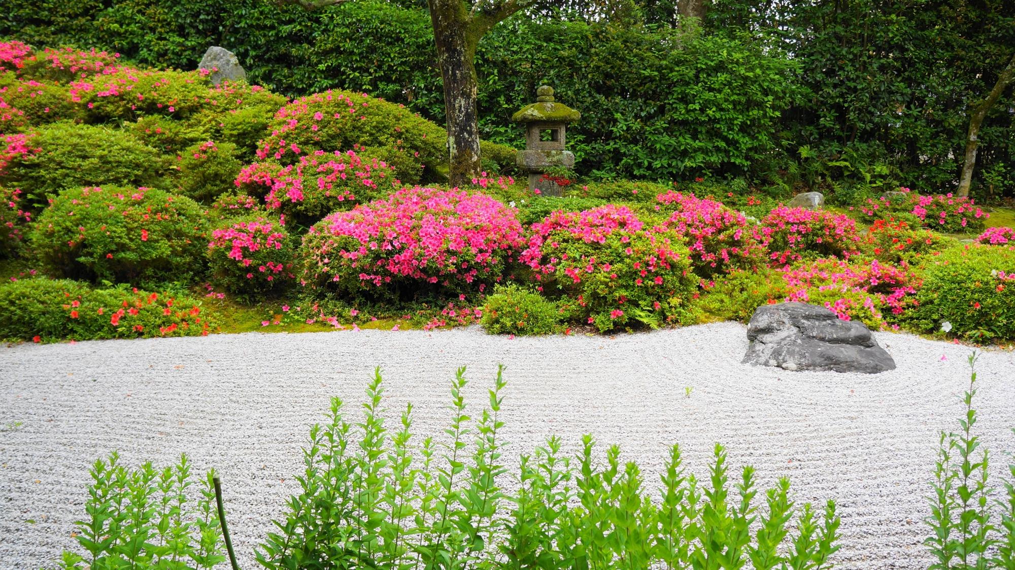 違った趣きを感じられる金福寺の方丈から眺めた庭園とサツキ