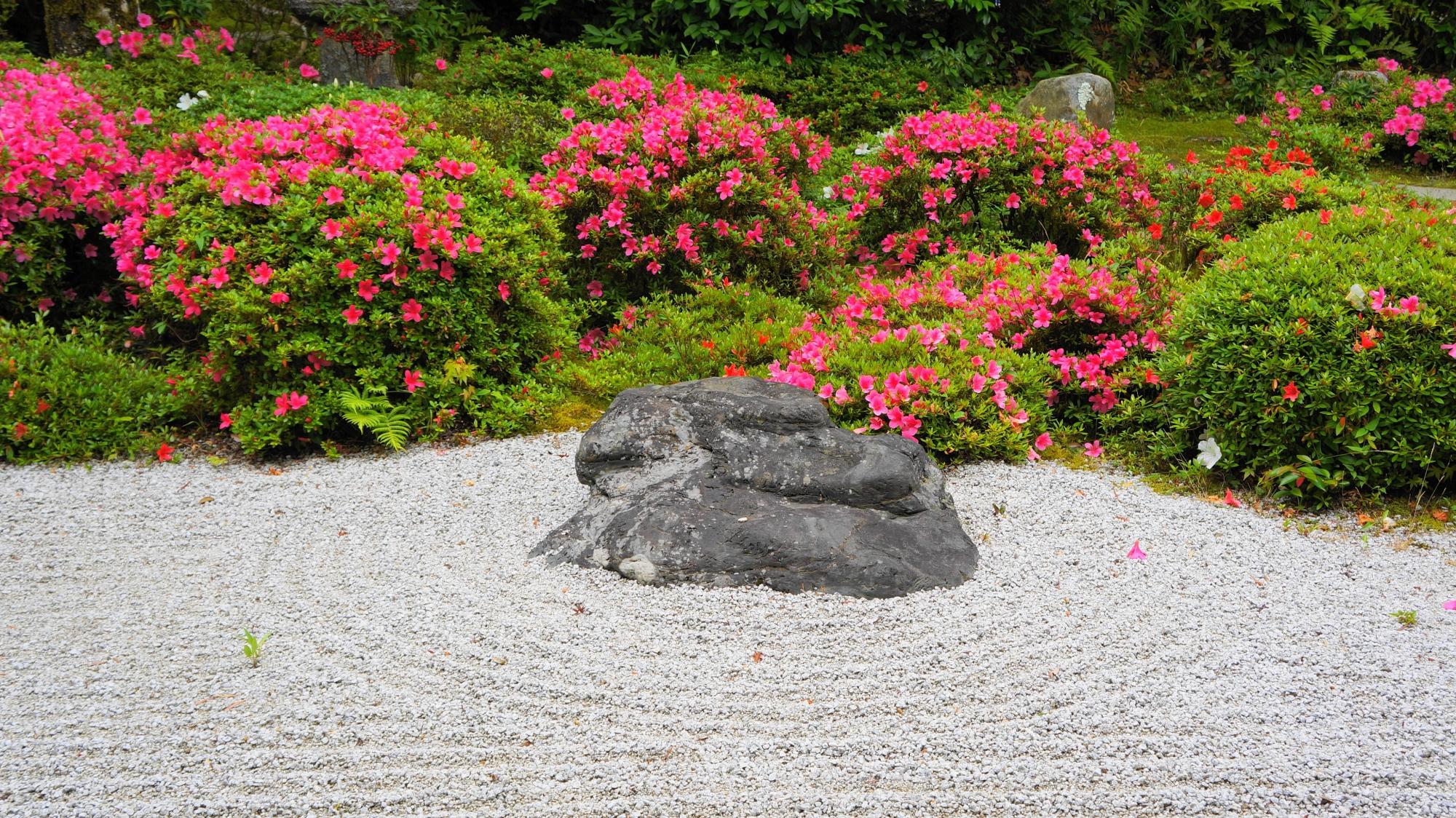金福寺の綺麗な砂の文様と華やぐサツキ