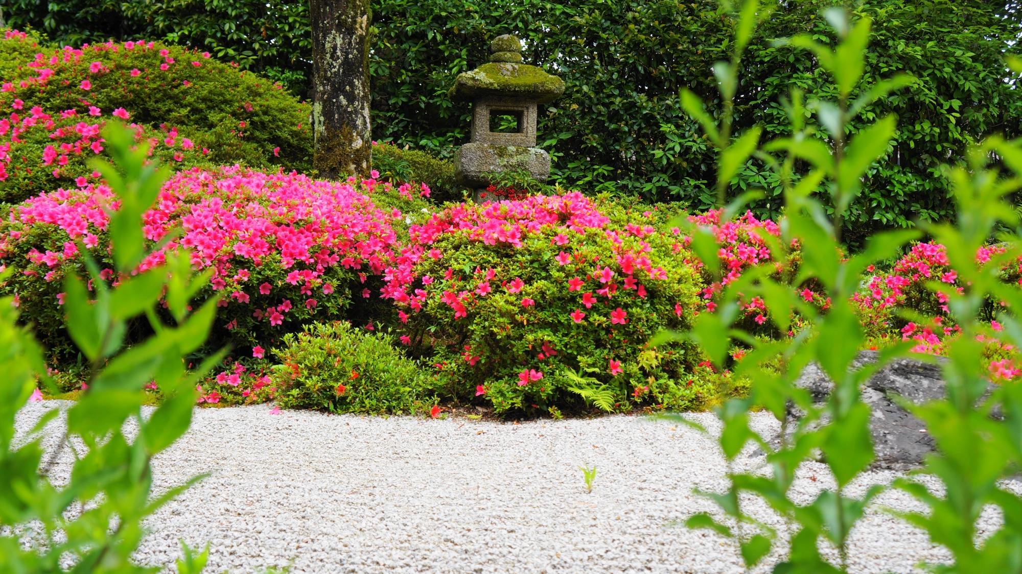 金福寺の鮮やかな緑と煌くピンクにつつまれる蟷螂