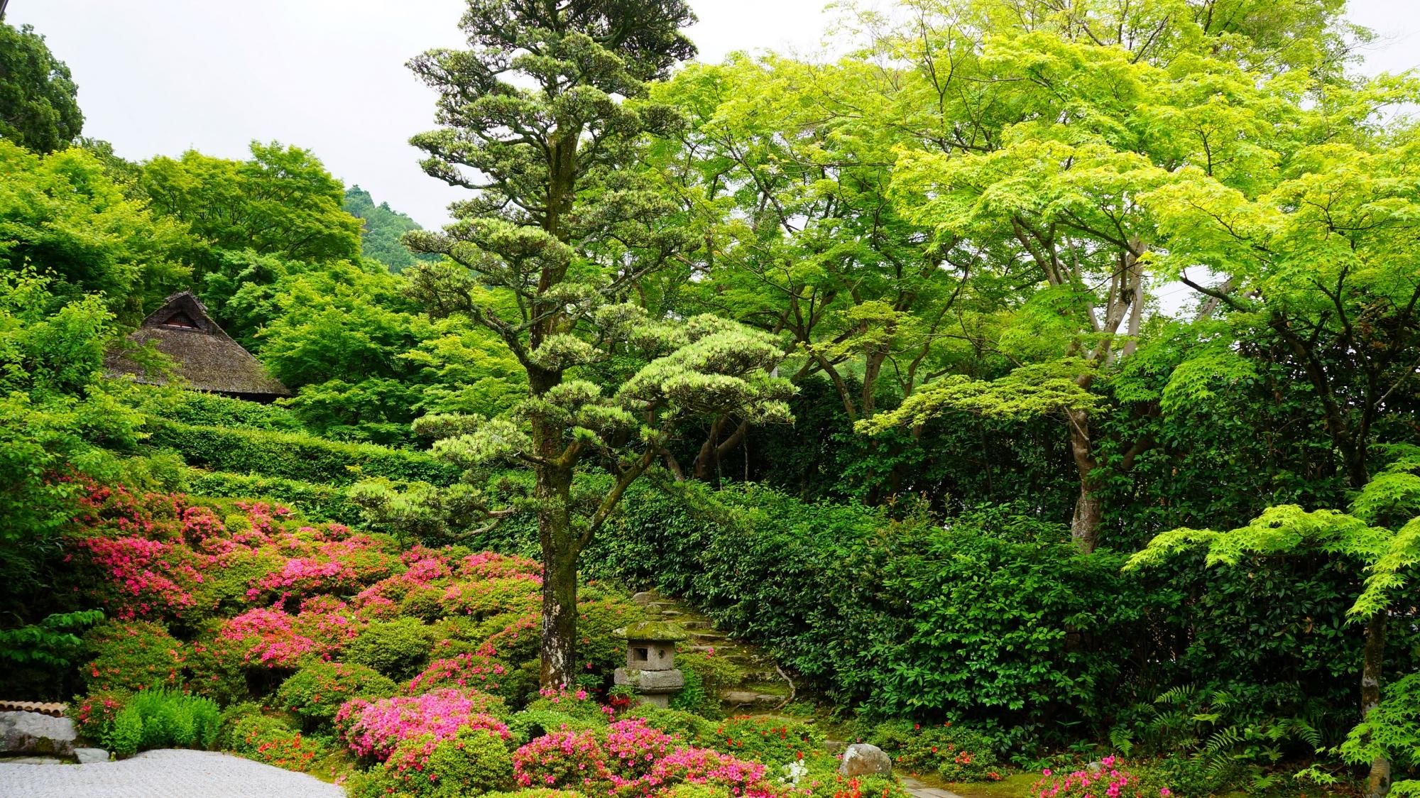 綺麗な新緑によって鮮やかな緑の空間が広がる金福寺