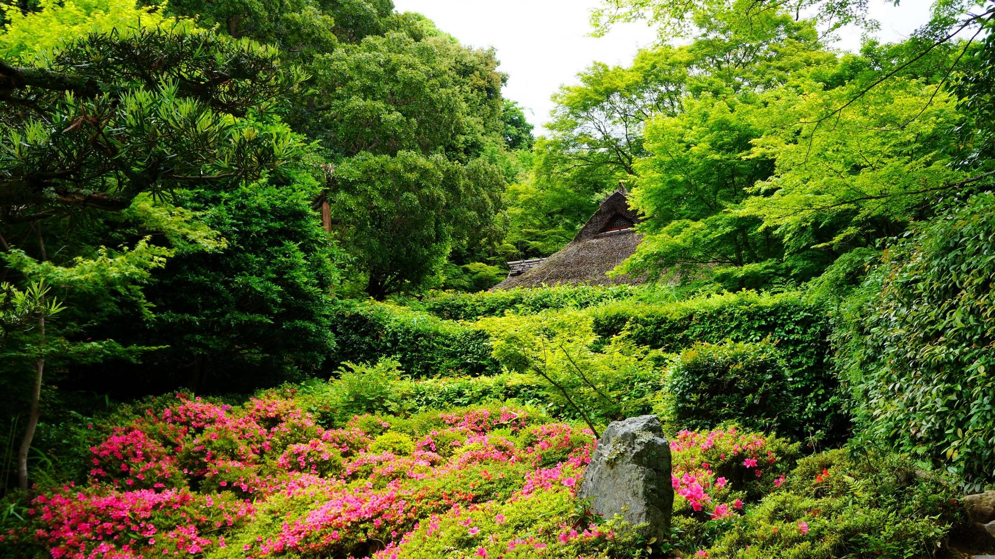 庭園の前から眺めたサツキが演出する芭蕉庵