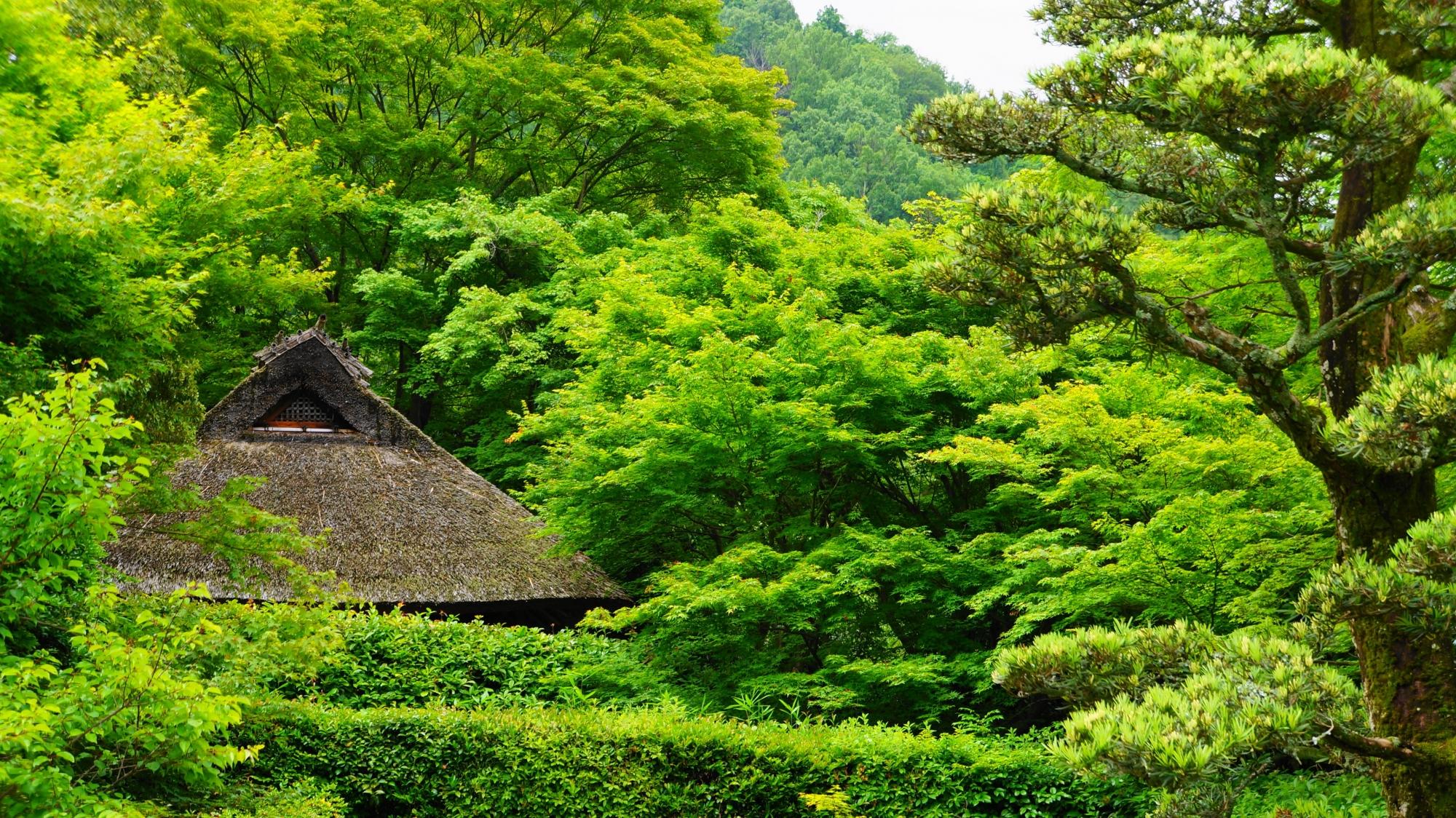 圧倒的な緑につつまれる金福寺の茅葺屋根の芭蕉庵