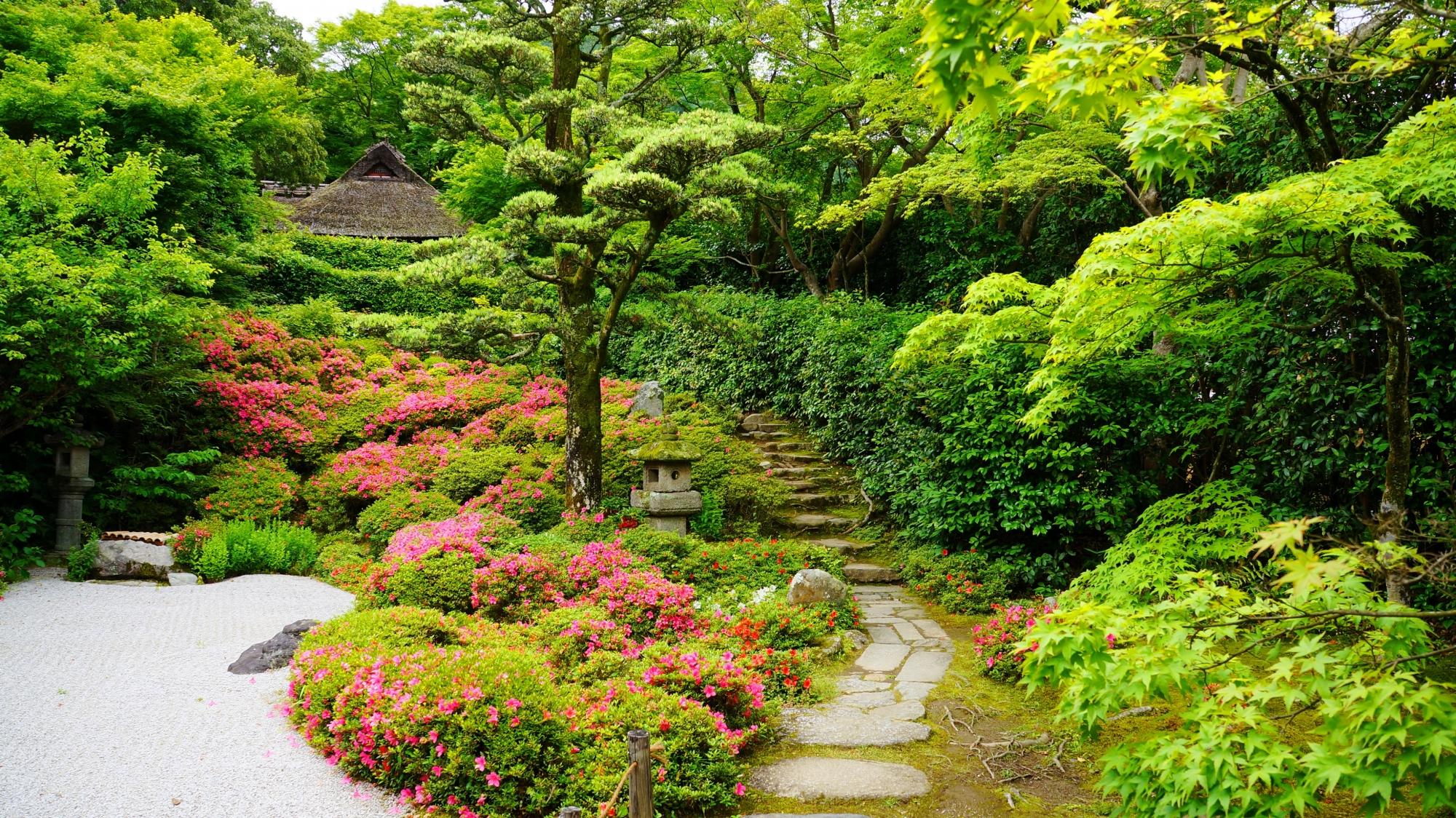 金福寺の素晴らしいサツキや新緑と春の情景