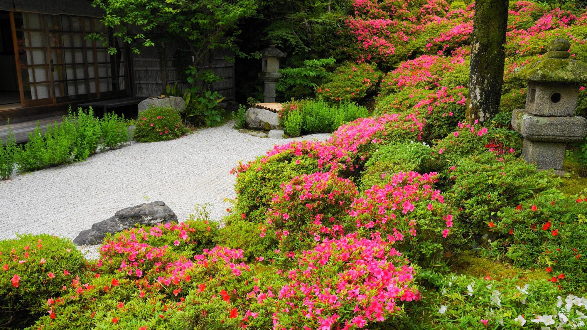 金福寺の長閑な境内をつつむサツキや新緑の鮮やかな春色