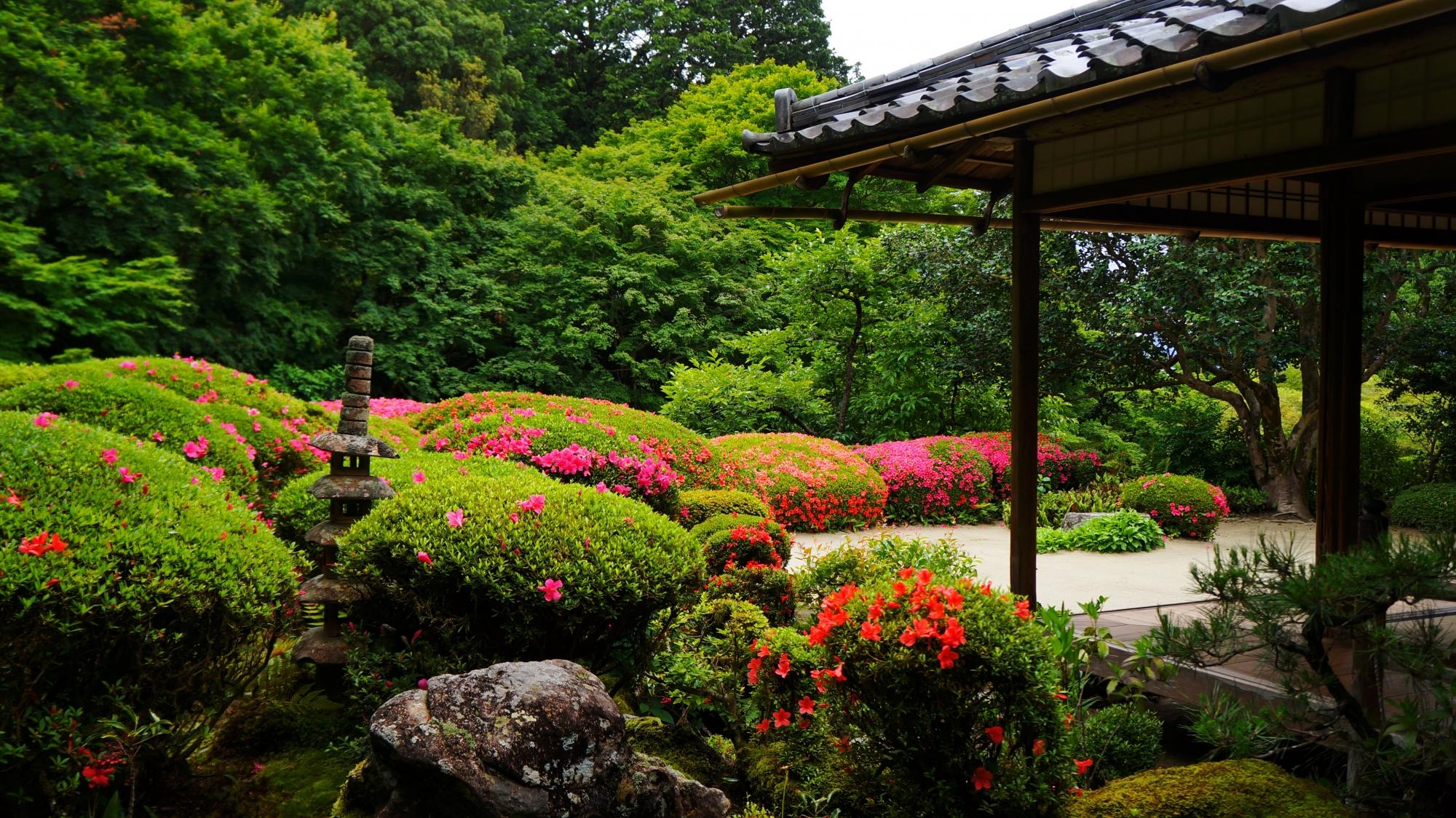 詩仙堂の見ごろをむかえた庭園のサツキ