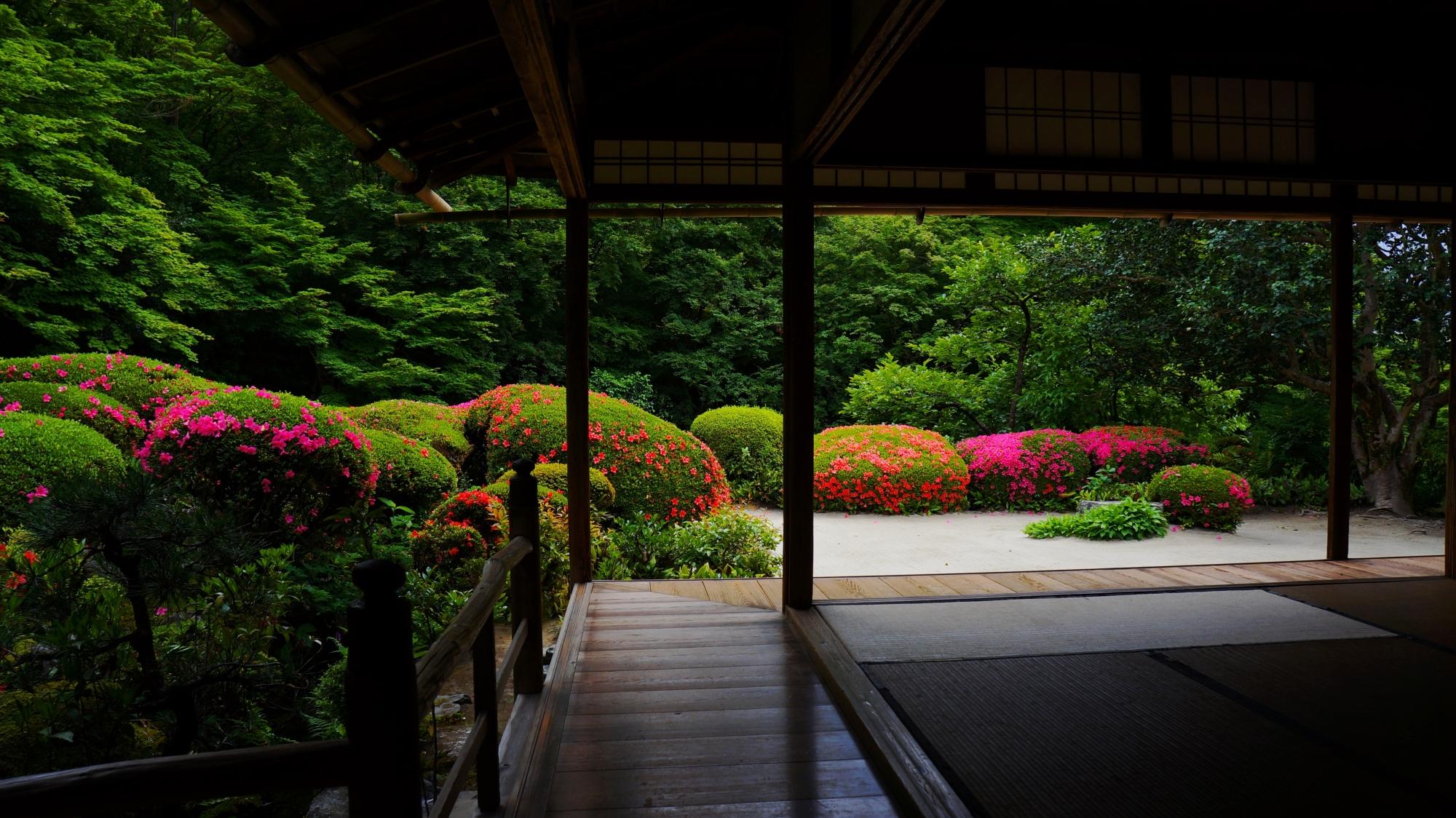詩仙堂の枯山水庭園を彩る色とりどりのサツキ