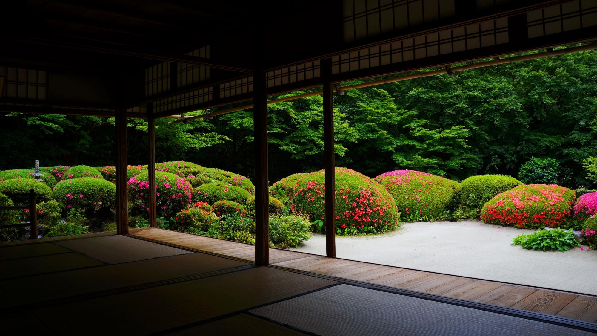 詩仙堂の書院奥から眺めたサツキと緑の庭園