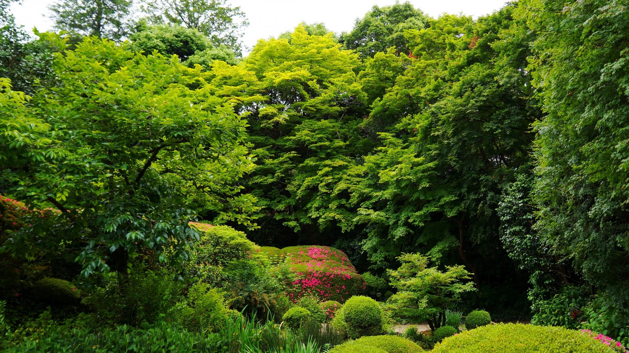 豪快な緑や青もみじにつつまれる詩仙堂