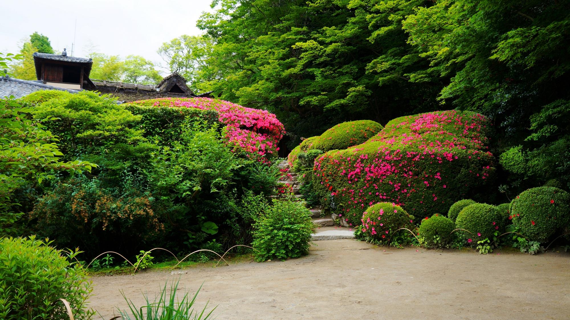 春から初夏にかけての素晴らしい彩りのサツキと嘯月楼(しょうげつろう)