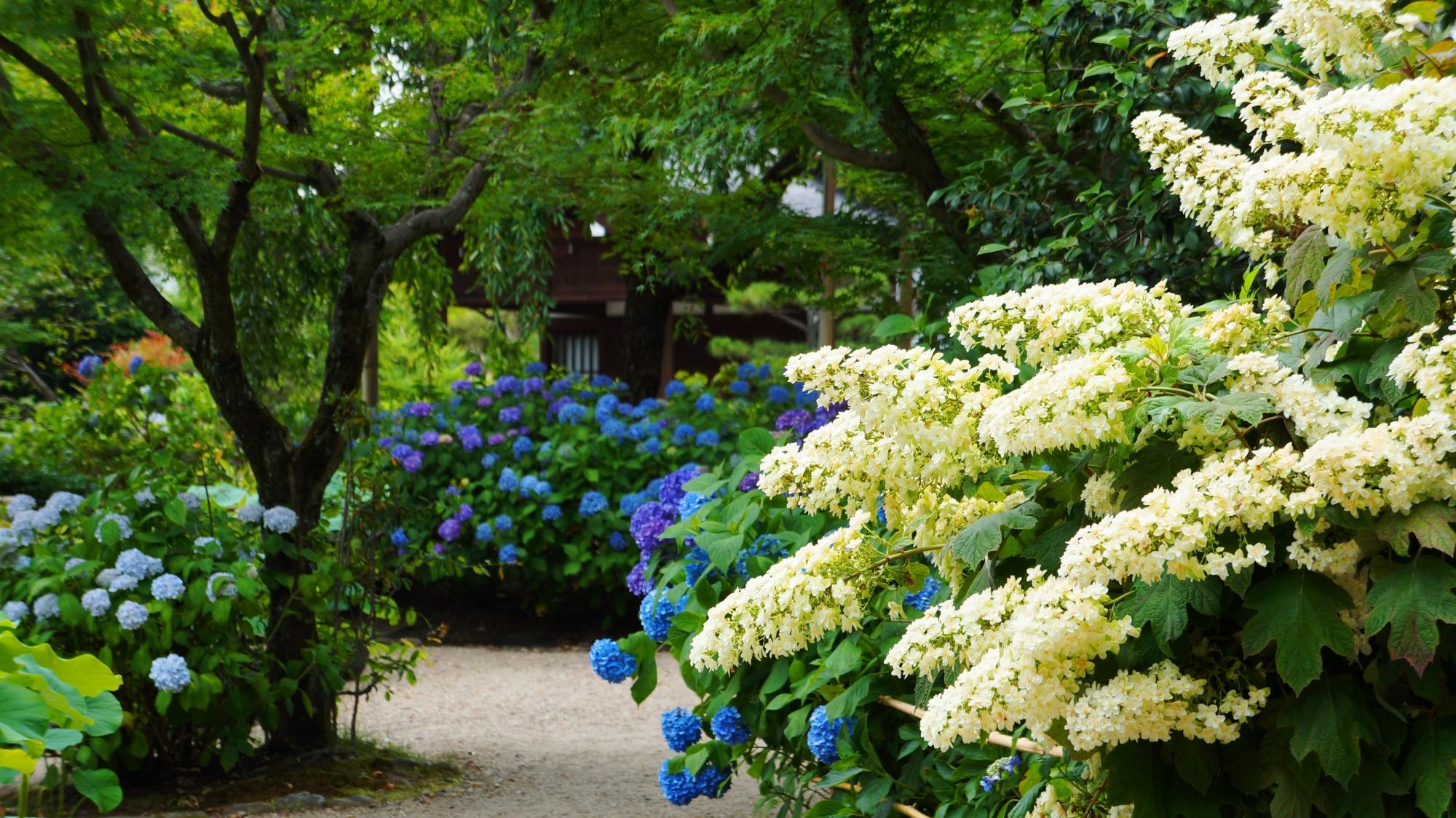 法金剛院の素晴らしい紫陽花や初夏の情景