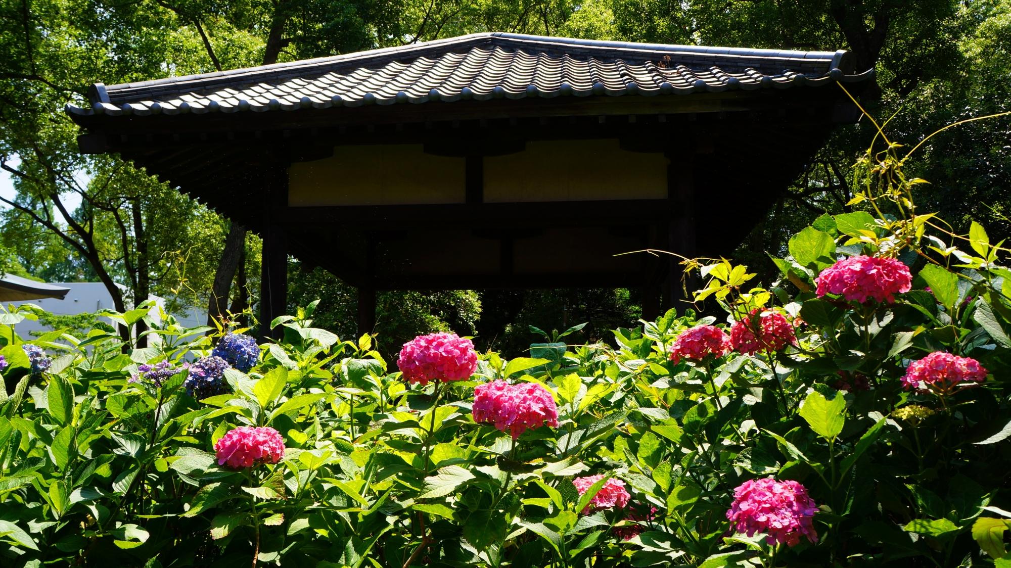 背景に建物が入り絵になる藤森神社のあじさい