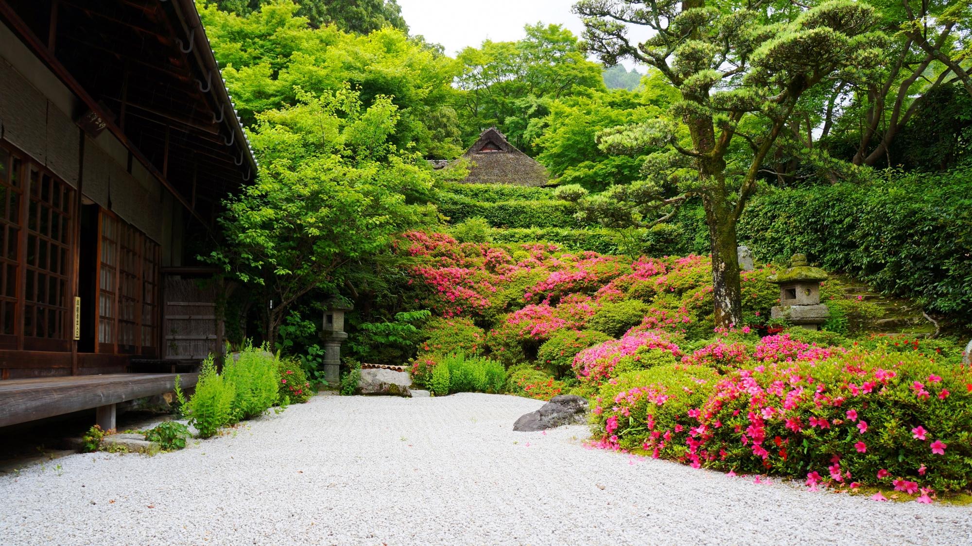 金福寺 さつきと新緑 俳句の名所の華やかな彩り