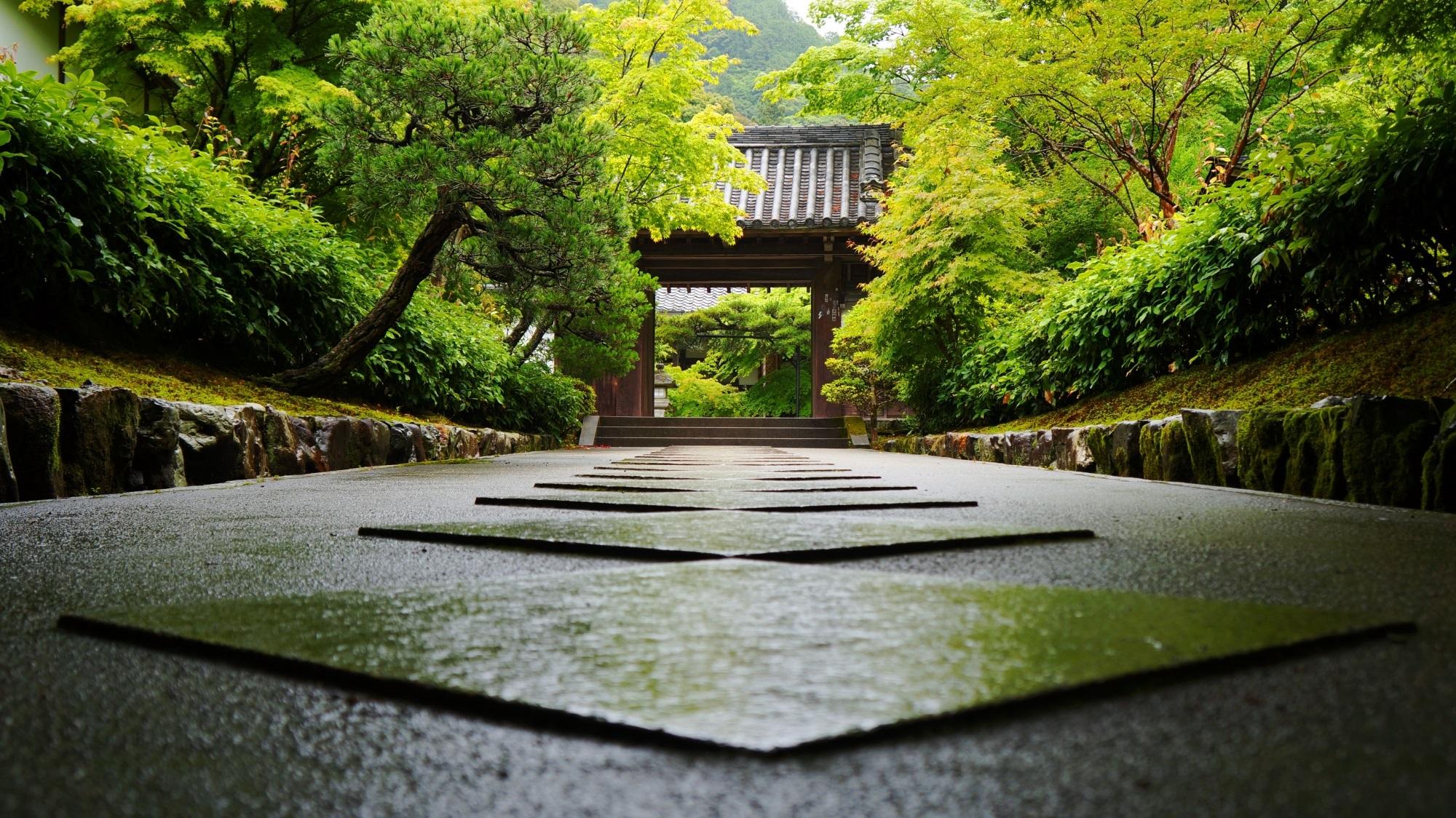 南禅寺 最勝院(高徳庵) 新緑と青もみじ 絵になりすぎる参道