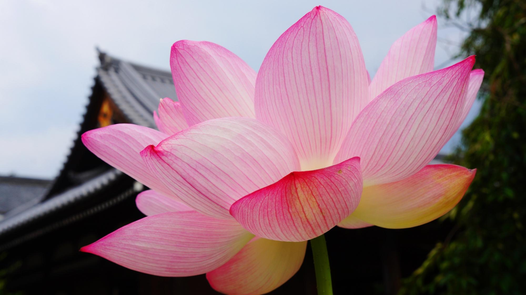 礼堂を華やぐ咲き誇るピンクの大輪